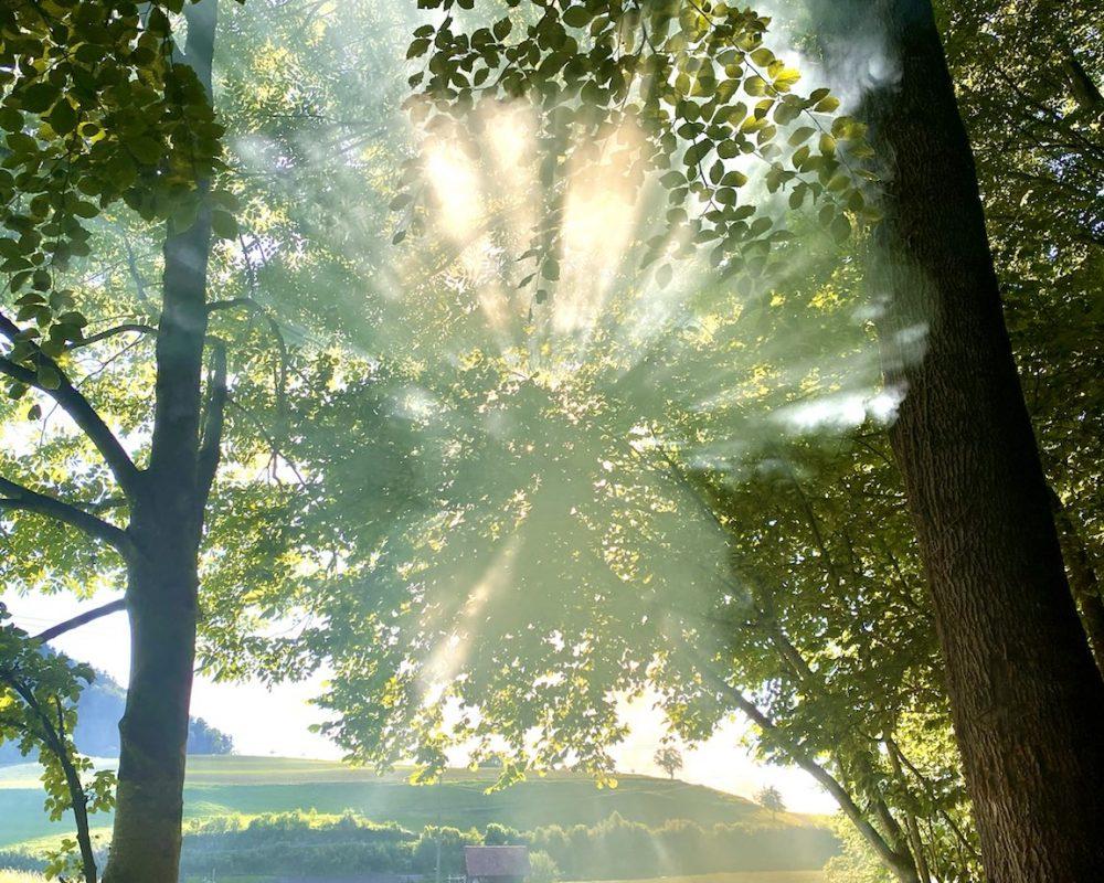 piękny leśny krajobraz, las i słońce, zielony las, drzewa w lesie